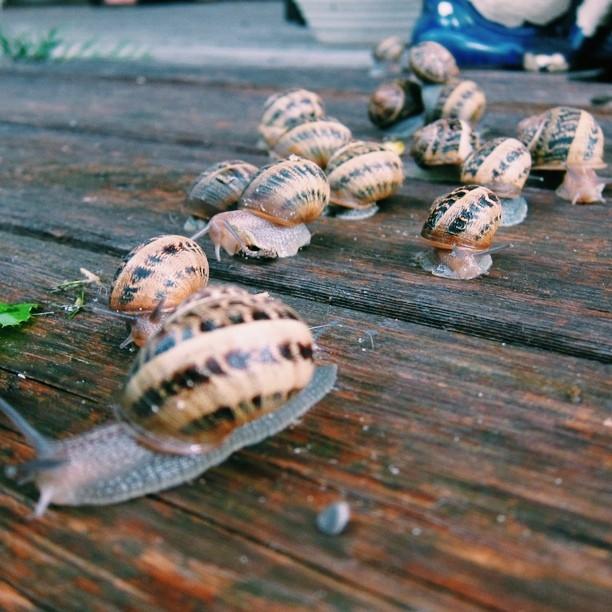 Snail racing #vscocam