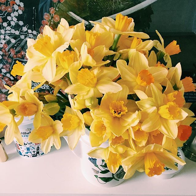 Nothing like coming home on the day #daffodils explode :)