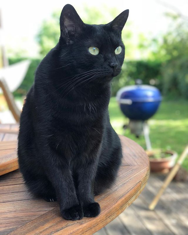 Turns out that iPhone portrait mode works well also with black cats (often IR autofocus doesn't ;)